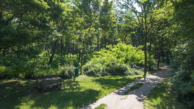 Laaer Wald in Wien Favoriten