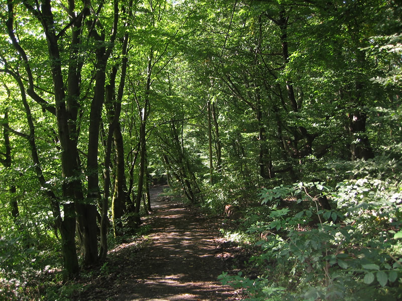 Ottakringer Wald in Wien-Ottakring