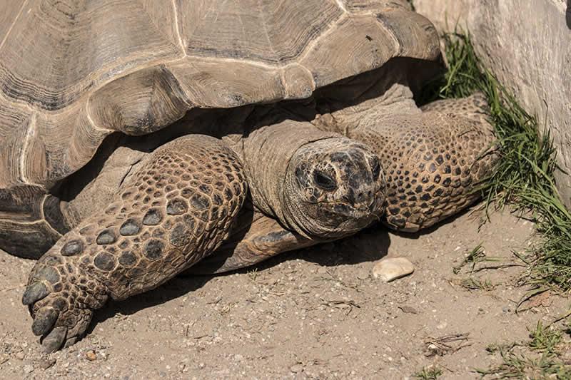 Raritätenzoo Ebbs / Schildkröte
