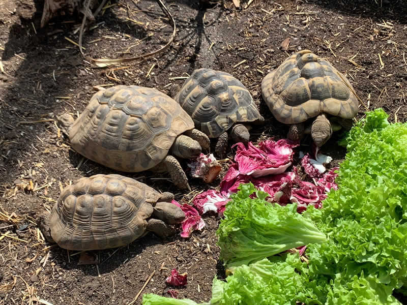 Reptilien Zoo Forchtenstein / Schildkröten