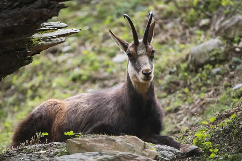 Wildpark Assling in Osttirol