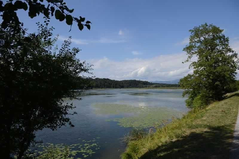 Gösselsdorfer See in Kärnten