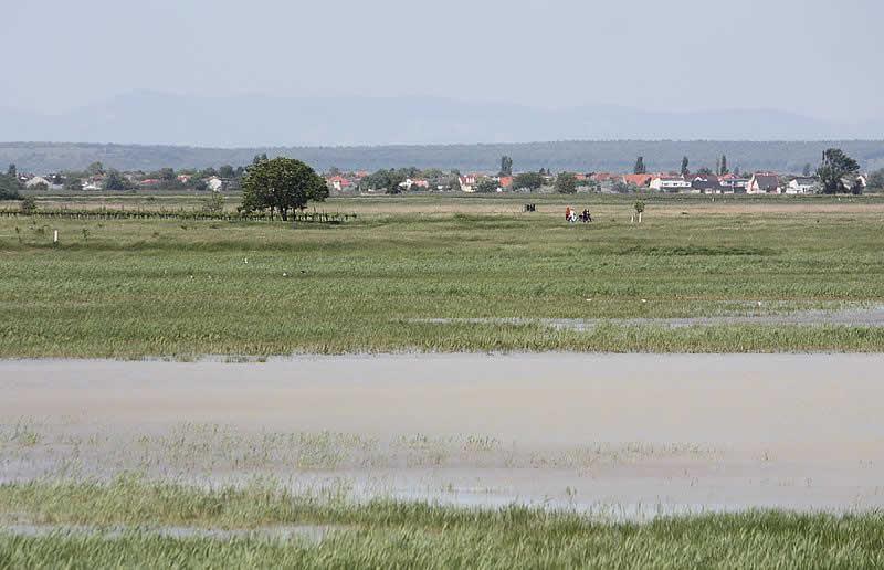 Lange Lacke im Burgenland