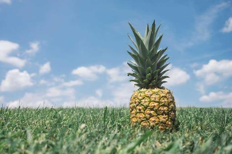 Lebensmittel Ananas