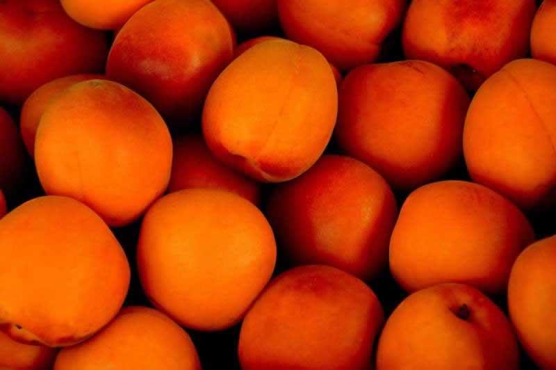 Lebensmittel Aprikose