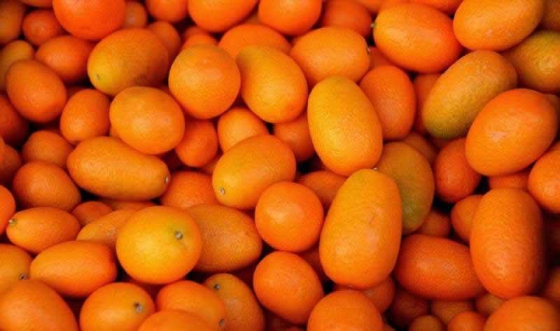 Lebensmittel Kumquat