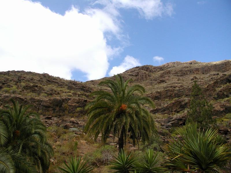 Urlaub Gran Canaria