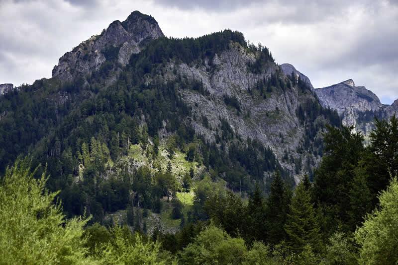 Walderlebnispfad bei Bregenz