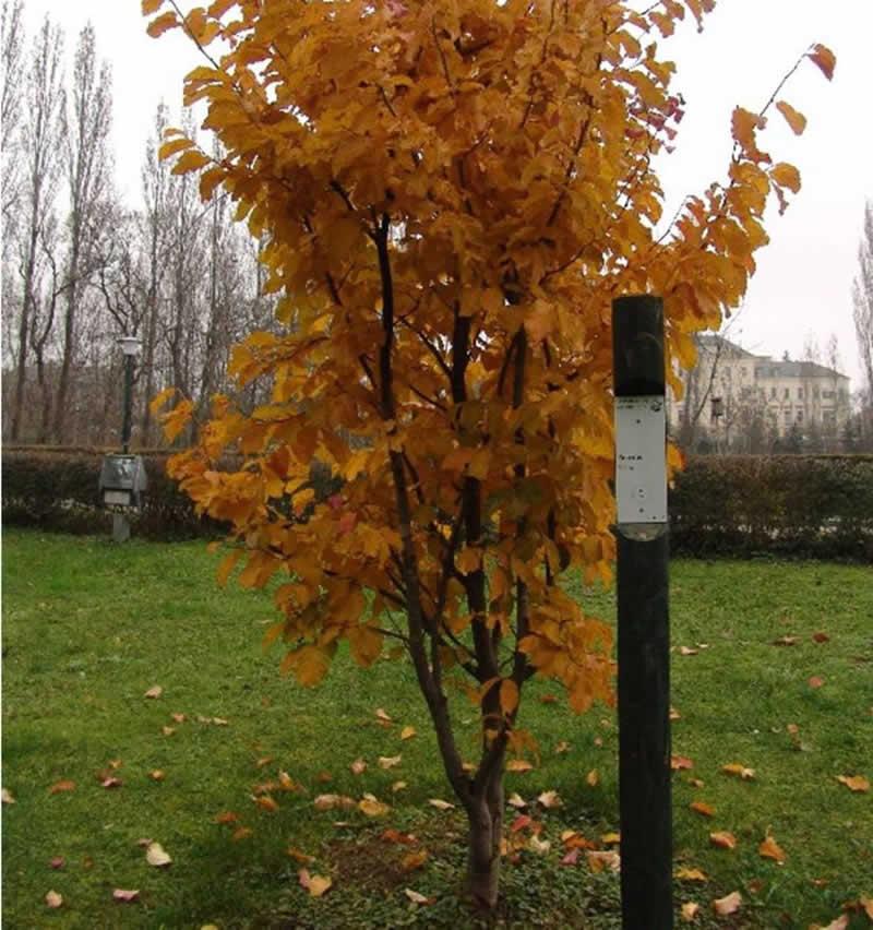 Lehrpfad Baumriesen in Eggenburg