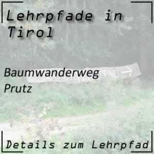 Lehrpfad Prutz Baumwanderweg