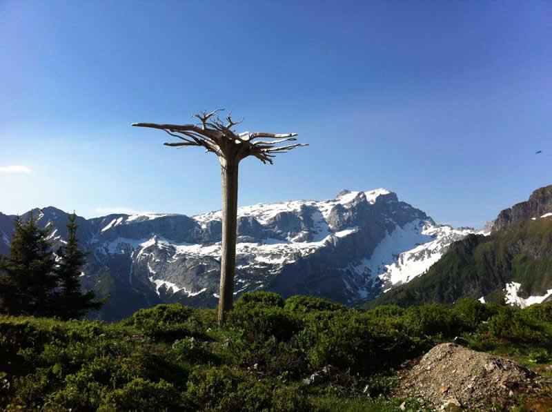 Lehrpfad AlpkulTour bei Schruns-Tschagguns Vorarlberg