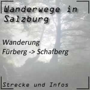 Wanderung von Fürberg auf den Schafberg beim Wolfgangsee
