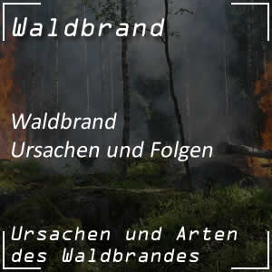 Waldbrand und Waldbrandgefahr