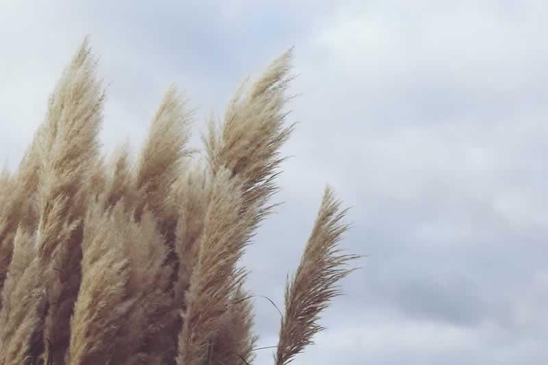 Sturm: gefährlicher starker Wind